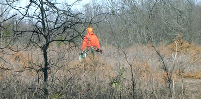 Hunter in an orange jacket walks through a forest
