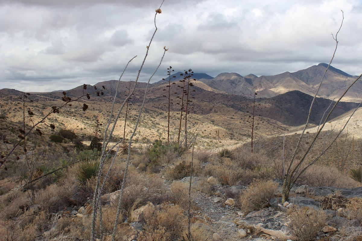 View of low clouds, hills, and dried yucca and agave stalks in the foreground.