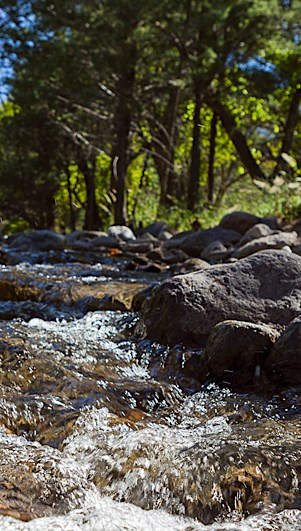 A stream, rocks, and trees
