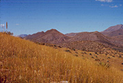 The Chiricahua mountains are surrounded by grasslands.  The low, rolling hills have numerous species of native and non-native grasses, and other desert shrubland species as well (such as agave and yucca).