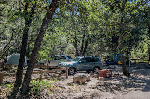 cars and tents under the shade of large oak trees