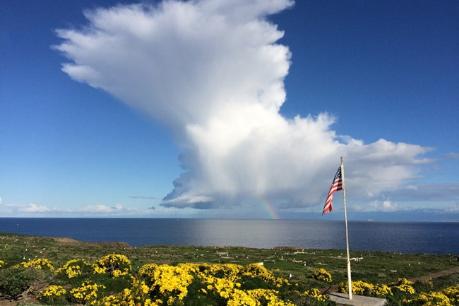 Yellow flowered plants with flagpole and cloud formation over ocean. ©Andrew Adams