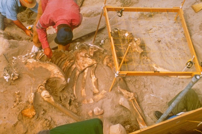 1994 pygmy mammoth excavation.