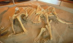 Pygmy Mammoth skeleton at visitor center