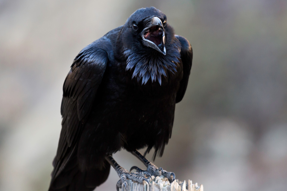 Raven Nude Photos 10