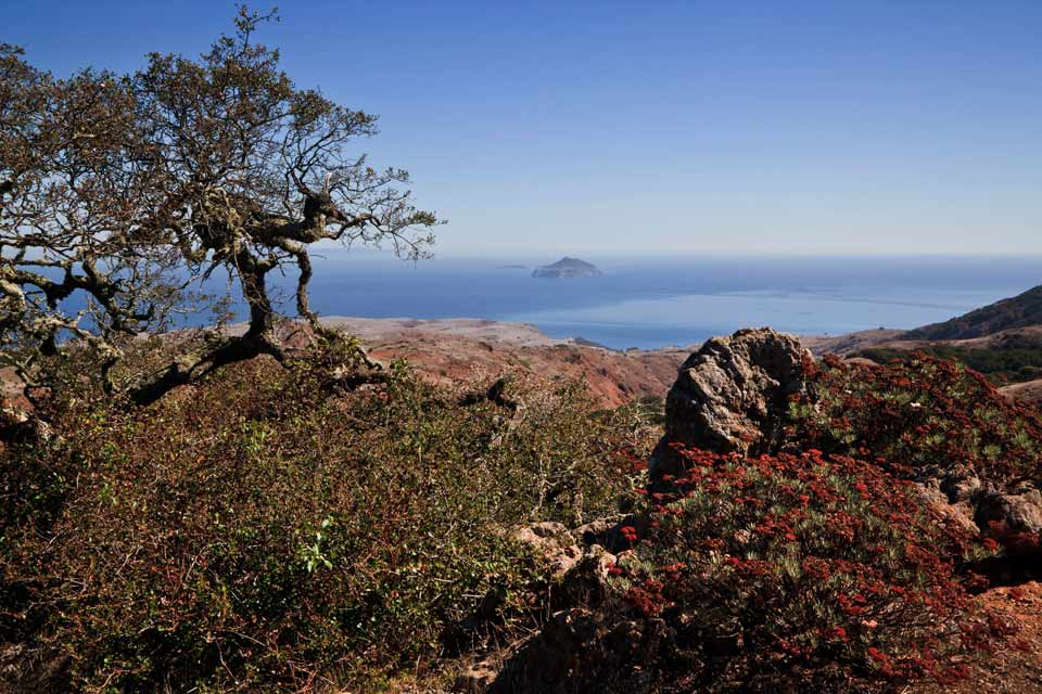 Island Chaparral - Channel Islands National Park (U.S. National ...