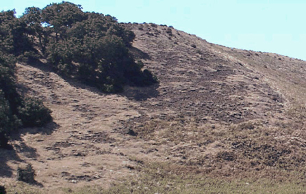 Topdeck soil on Santa Cruz Island