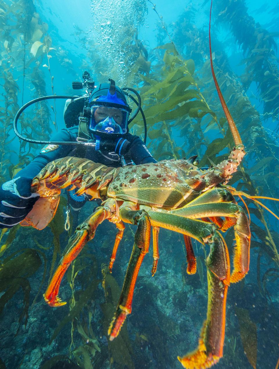 Kelp Forests - Channel Islands National Park (U.S. National Park ...