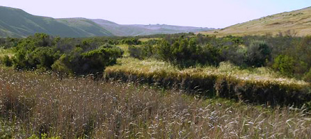 A mixture of habitats in Old Ranch Canyon on Santa Rosa Island