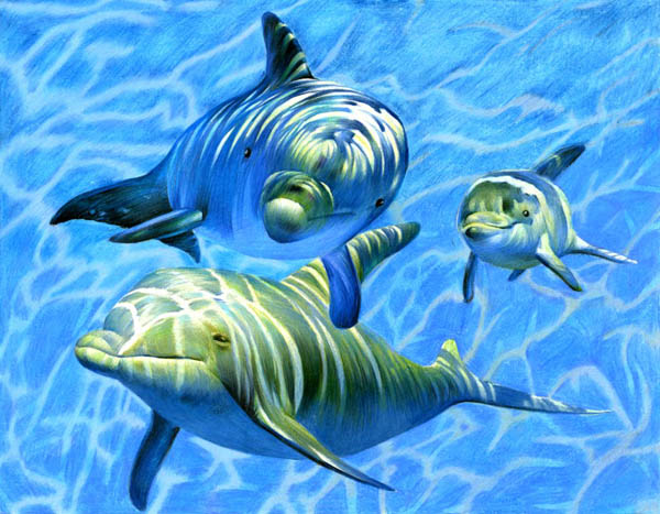 Group of dolphins underwater.
