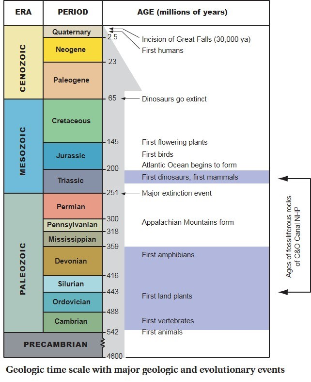 Scale showing the different geological time eras and periods, and major geologic and evolutionary events