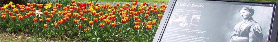 Clara Barton National Historic Site tulips in bloom.