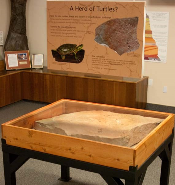 "The ""turtle trackway"" will be housed in this temporary exhibit at the Visitor Center until December 31, 2010."