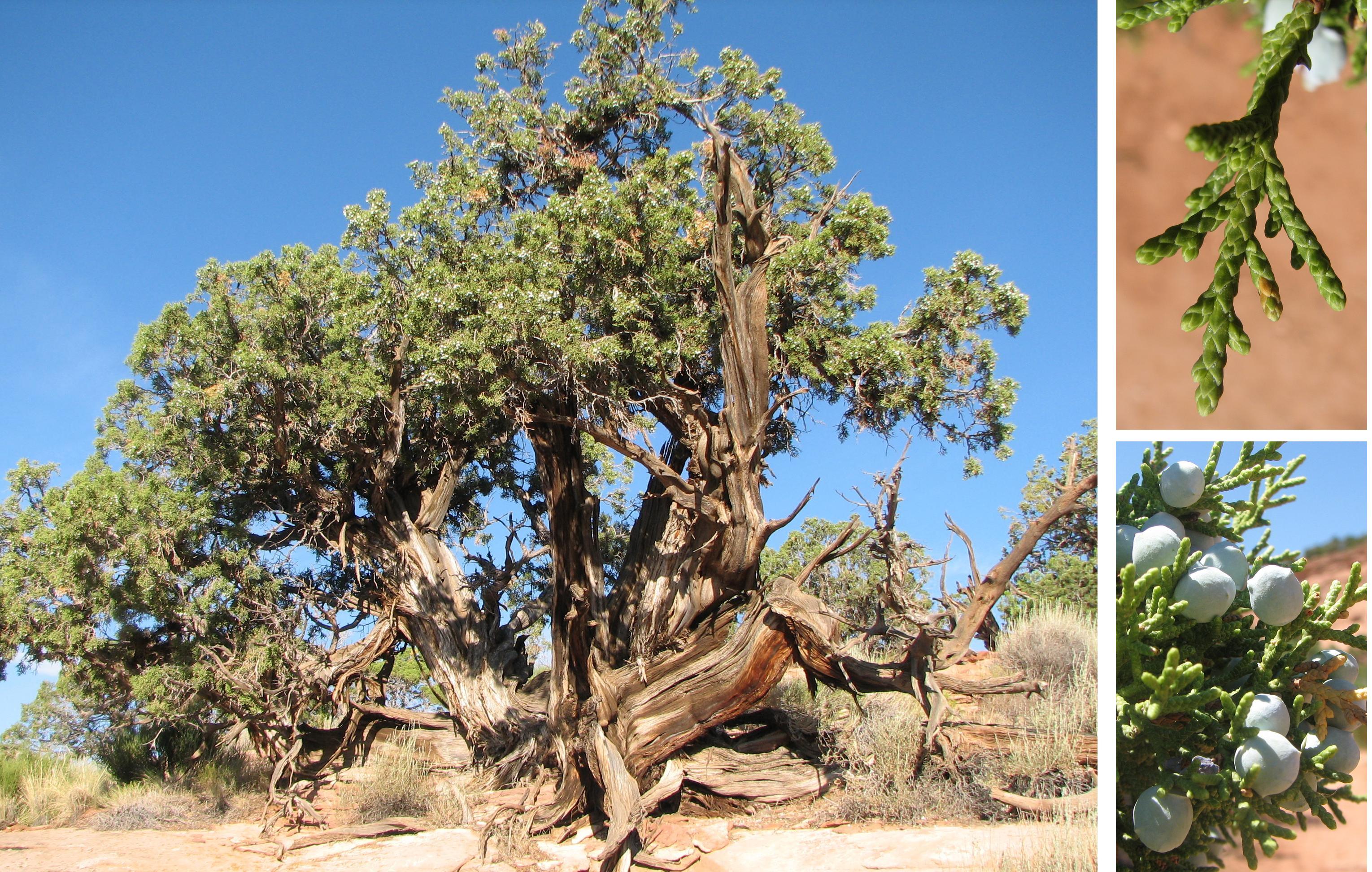 How to Identify Tree Species — The Family Handyman