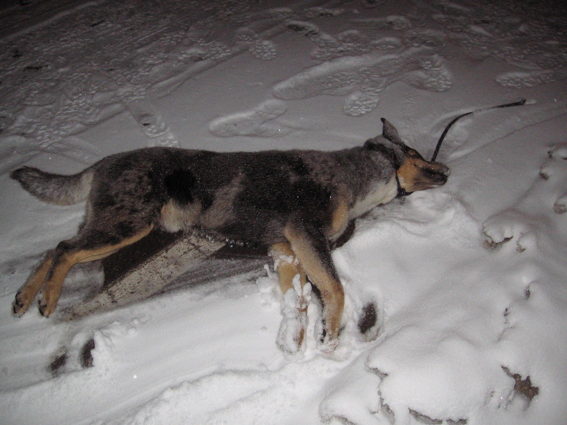 Dog Dragged and Kill in the Monument on December 30, 2009
