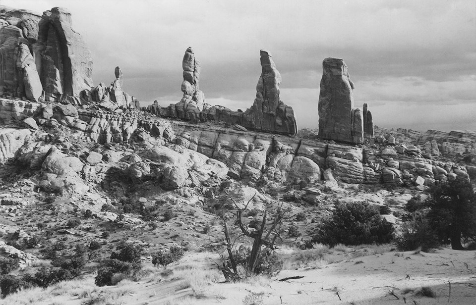 a black and white photo of stone spires a dead juniper tree is in the foreground with two living junipers to the right.