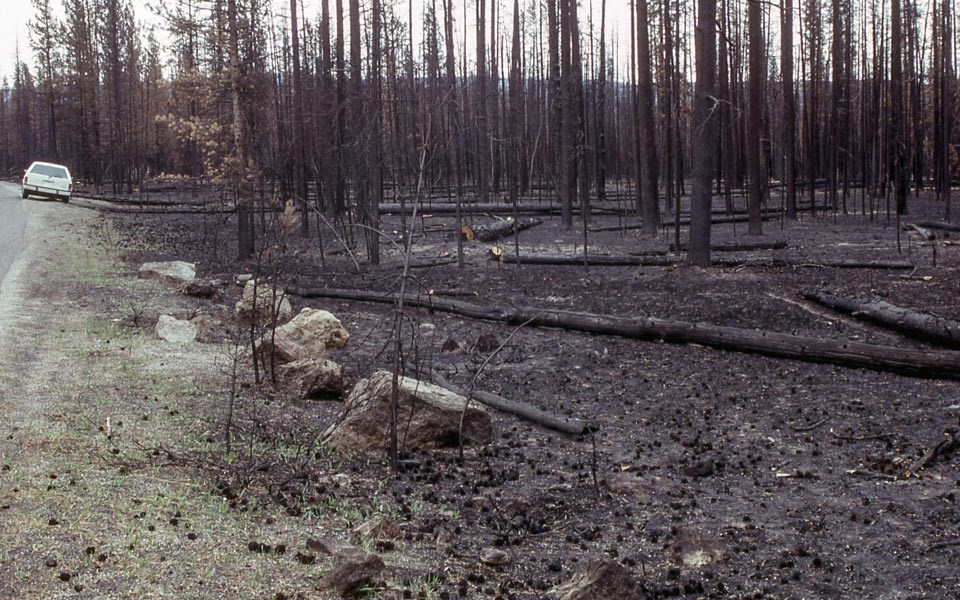 Burned forest after the 1988 fire season