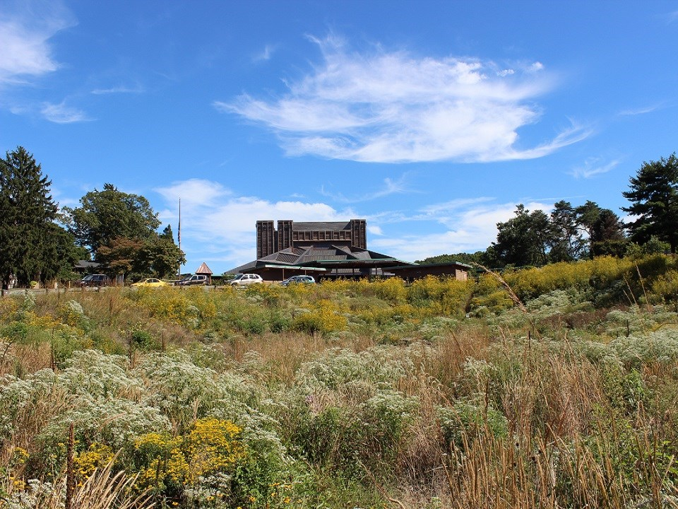 Meadow area with native tall grasses and plants with Filene Center in the background