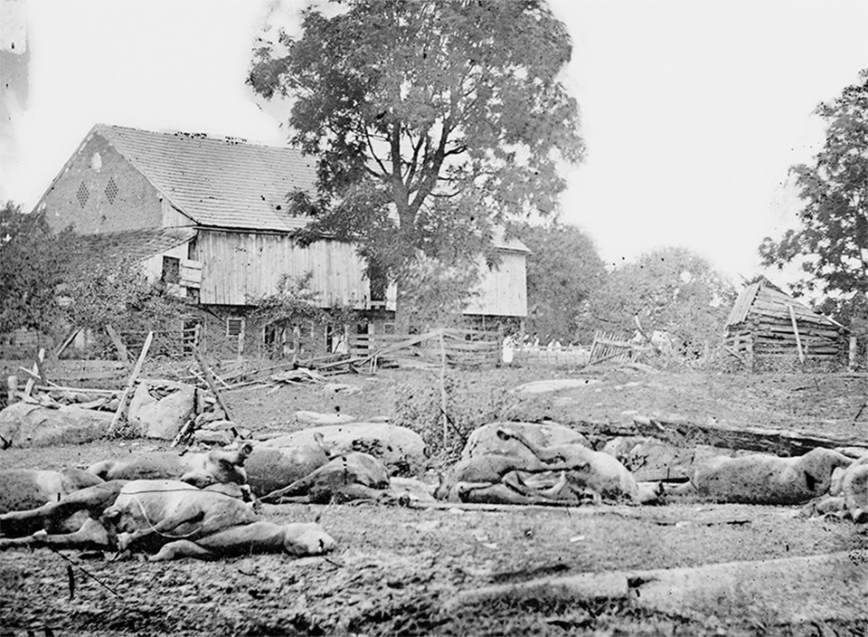 Dead horses scatter the ground in front of a large brick barn with single cannonball hole.
