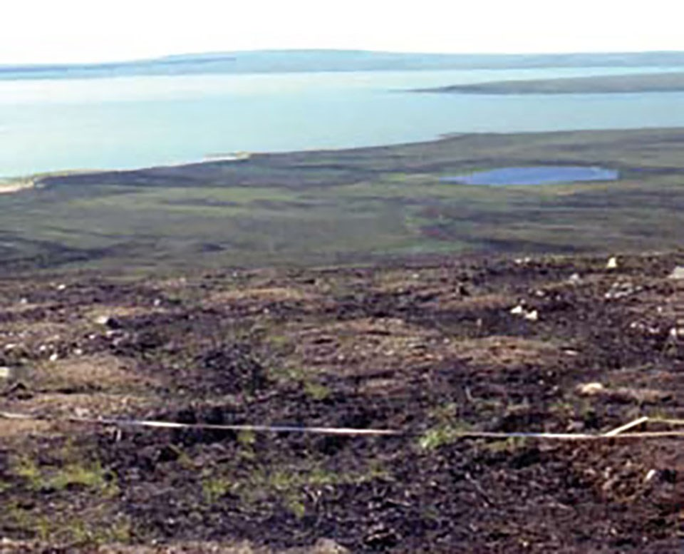 Burned tundra with very little green left.