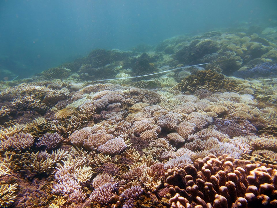 Bleached coral observed in Guam during a mass bleaching event in 2013. Coral reefs and the organisms they support are early indicators of climate change impacts.