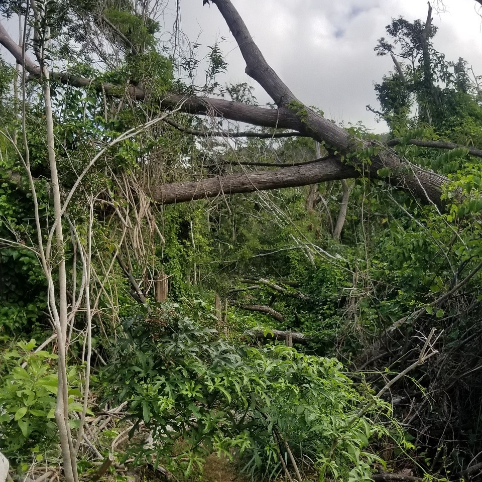 Clearing a section of Reef Bay Trail Post Irma