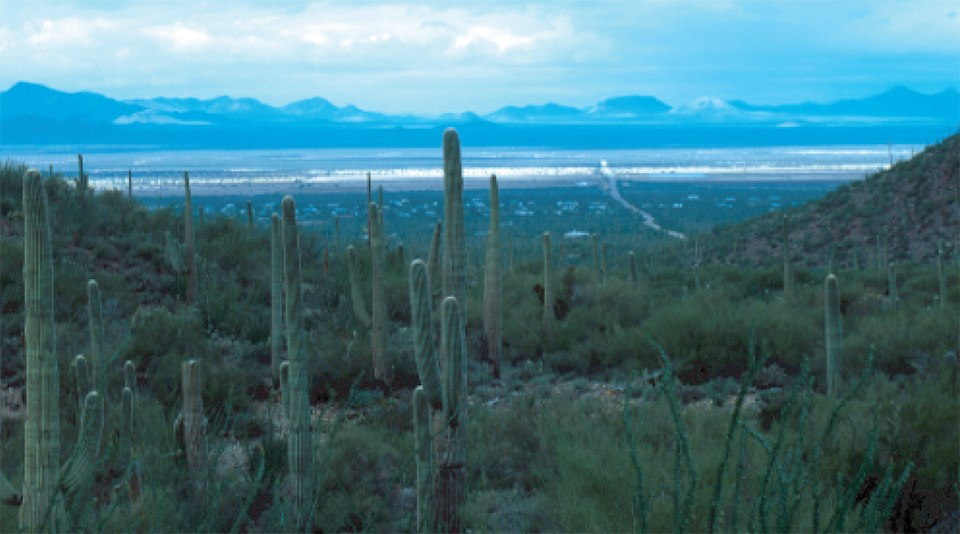 view of desert basin with cactus in foreground