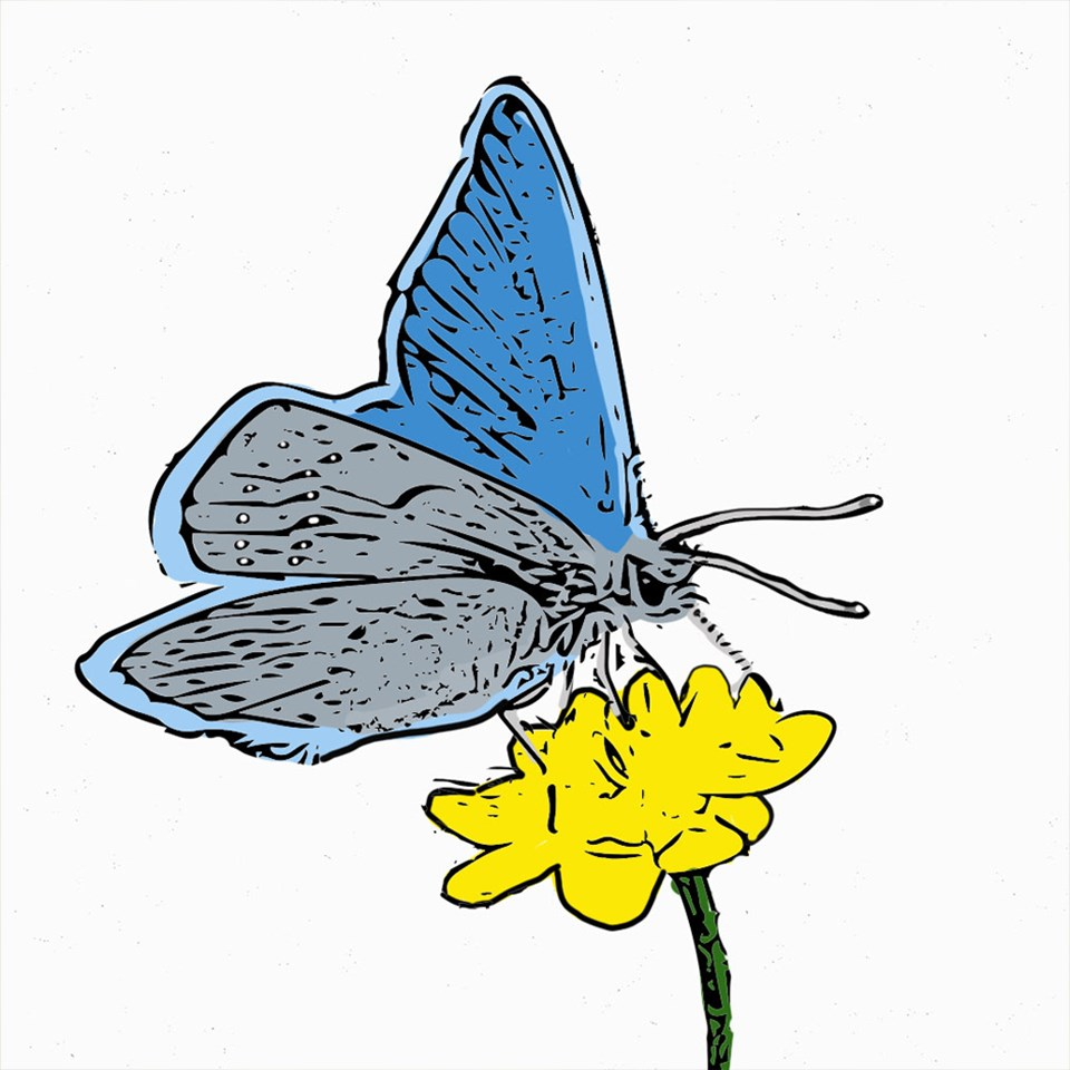 colored in drawing of butterfly on flower