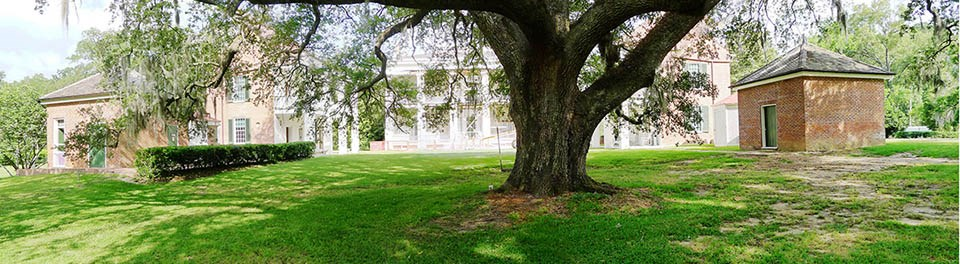 The branched of a sprawling tree arch over the grass of a courtyard, surrounded by grand estate buildings.