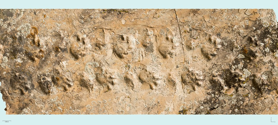 fossil tracks in sandstone