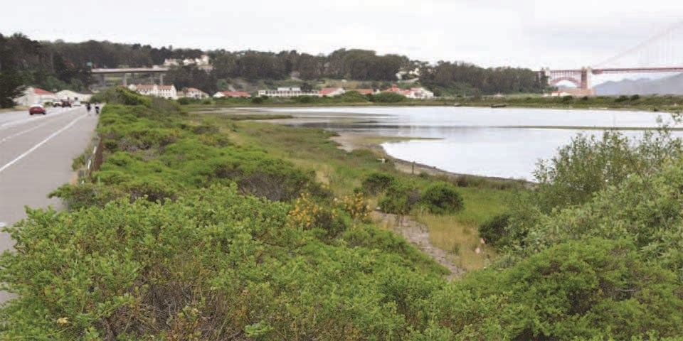 Image of Crissy Field after restoration: an estuary with an abundance of green vegetation.