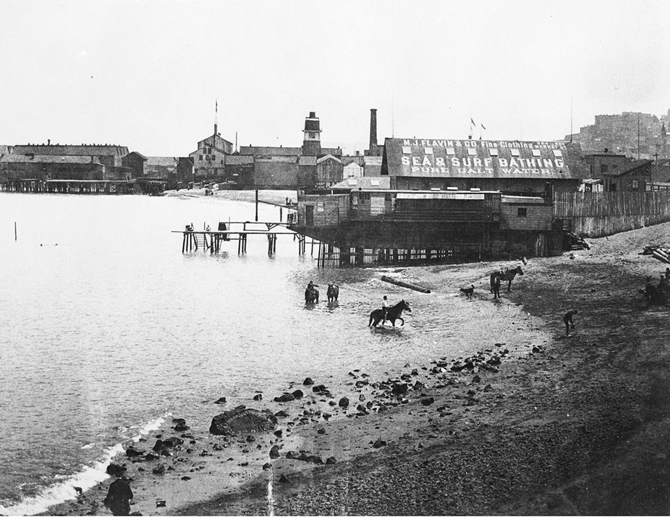 Historic photo of horses in Black Point Cove c1880s