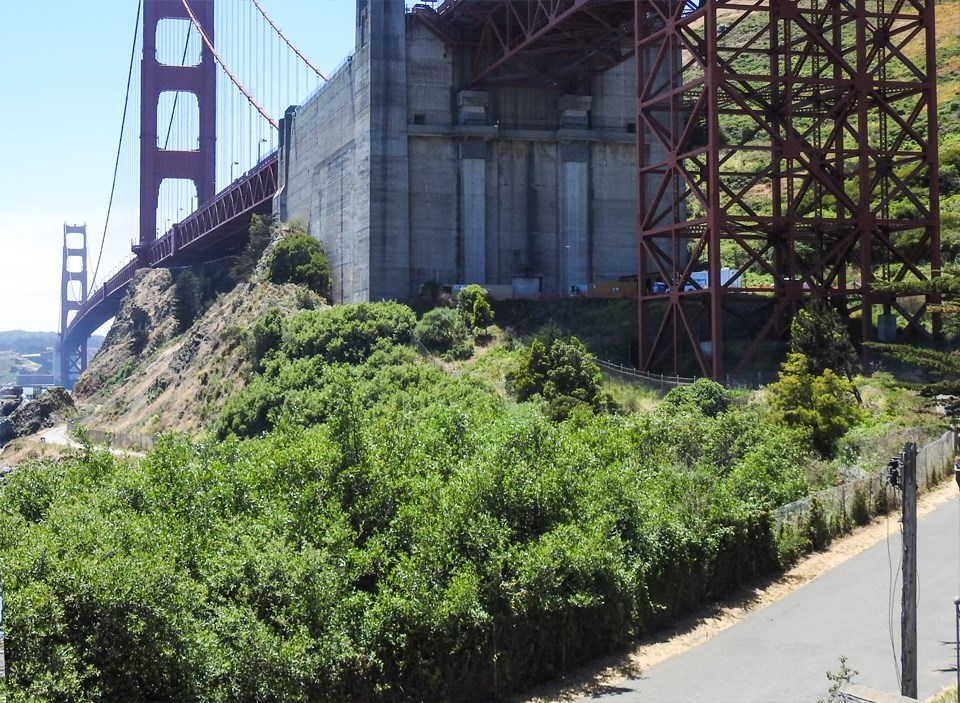 greenery by the golden gate bridge
