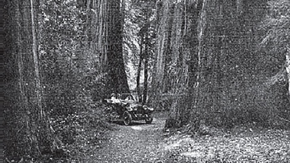automobile on muir woods trail