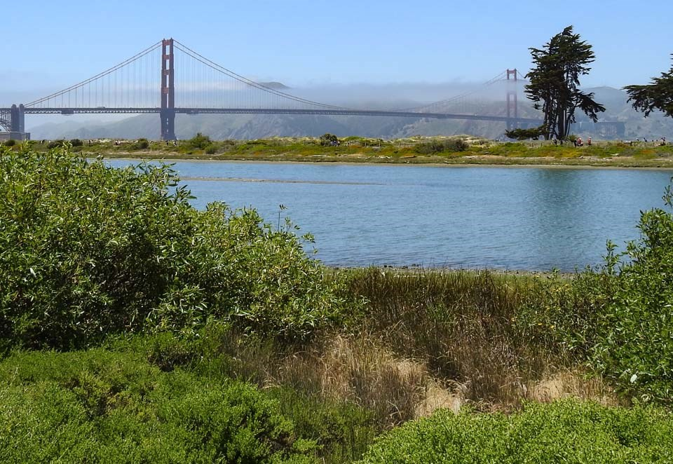 a grassy field with the golden gate bridge in the background