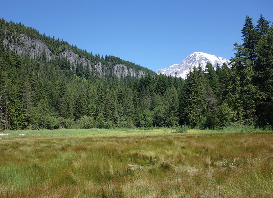 A green meadow surrounded by forested ridgeline, blue skies, and view of Mount Rainier.