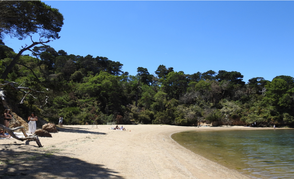 A color photo of several people scattered along a sandy beach. Relatively calm water washes up on the beach from the lower right and a dense forest rises behind the beach.