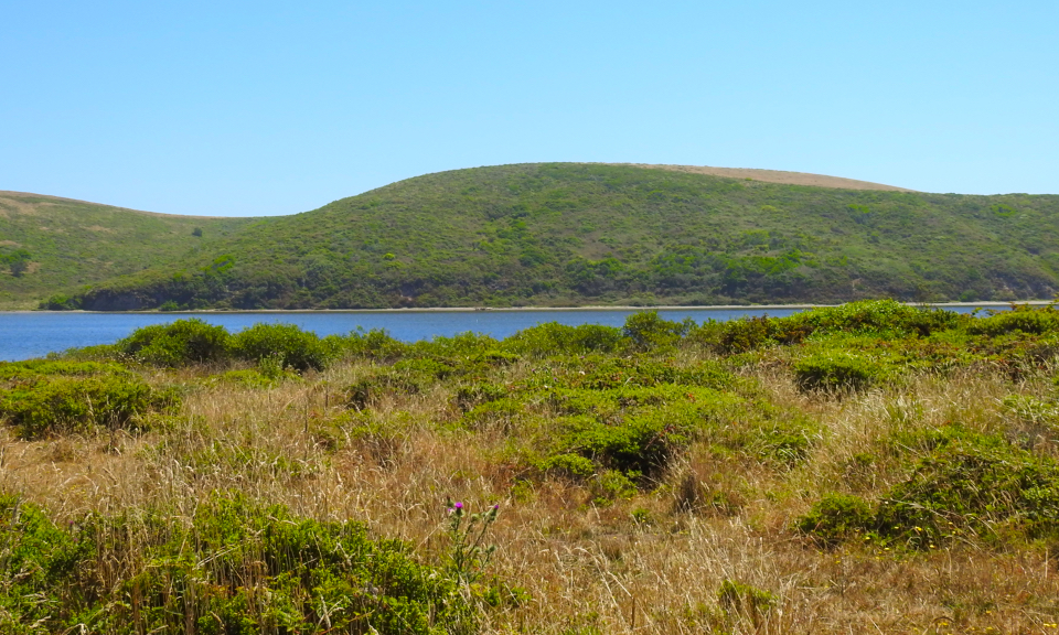 A color photo of coastal grass- and scrublands with water and hills in the background.