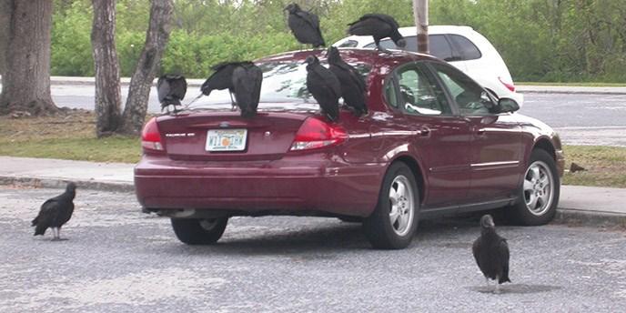 macchina con uccelli sopra