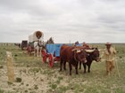 Santa Fe Trail reenactment with oxen and horses drawing a cart and a wagon