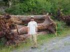 Intern standing in front of log pile
