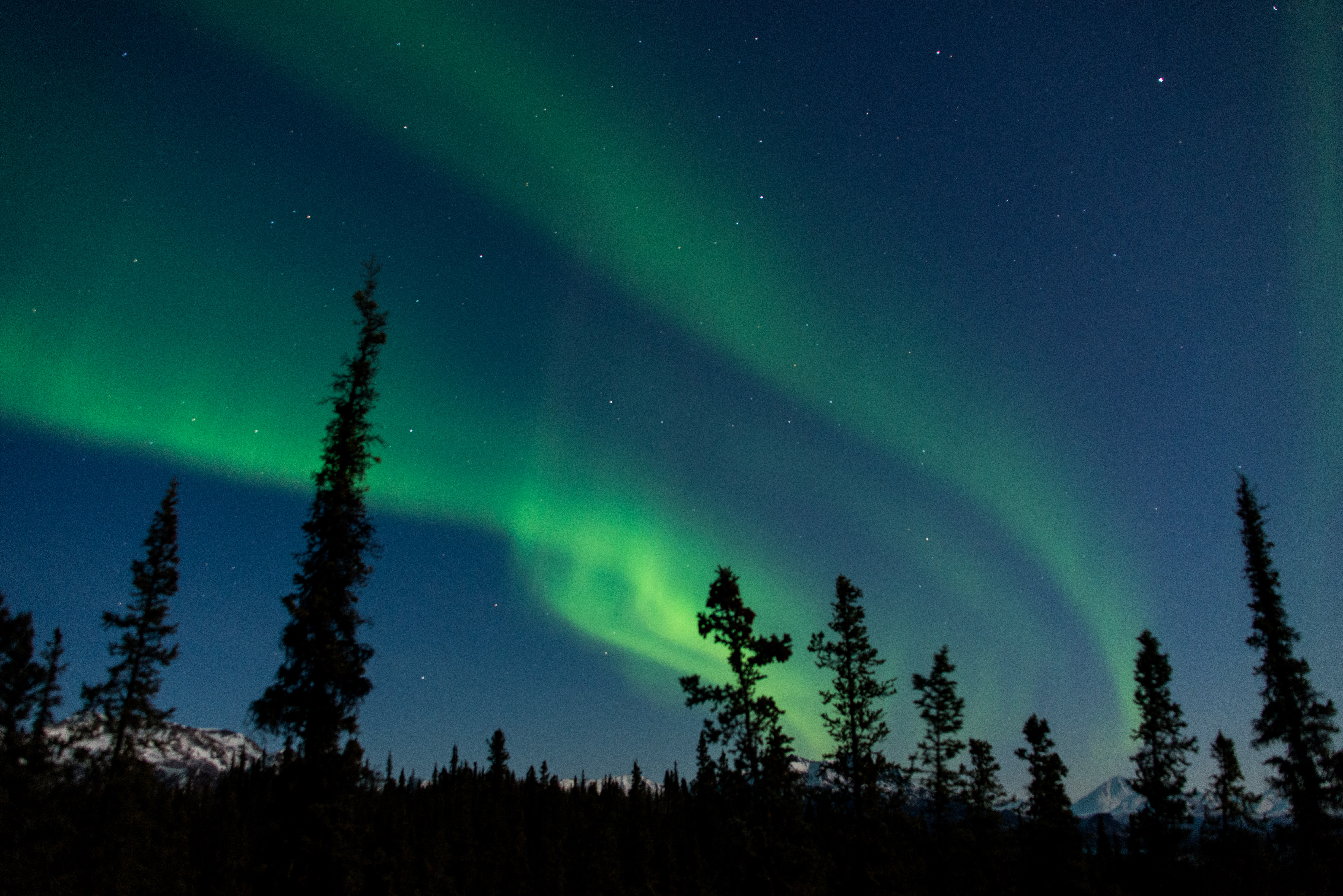 Two Ribbons Of Greenish Light In A Dark Blue Sky Over A Very Dark Forest