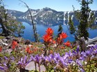Wildflowers in Crater Lake National Park