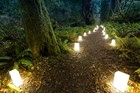 Candlelight walk in redwood forest