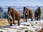 Illustration of a woolly mammoth herd by Mauricio Anton