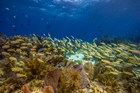 coral reef with bight yellow fish