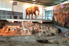 a life size Colombian mammoth painting