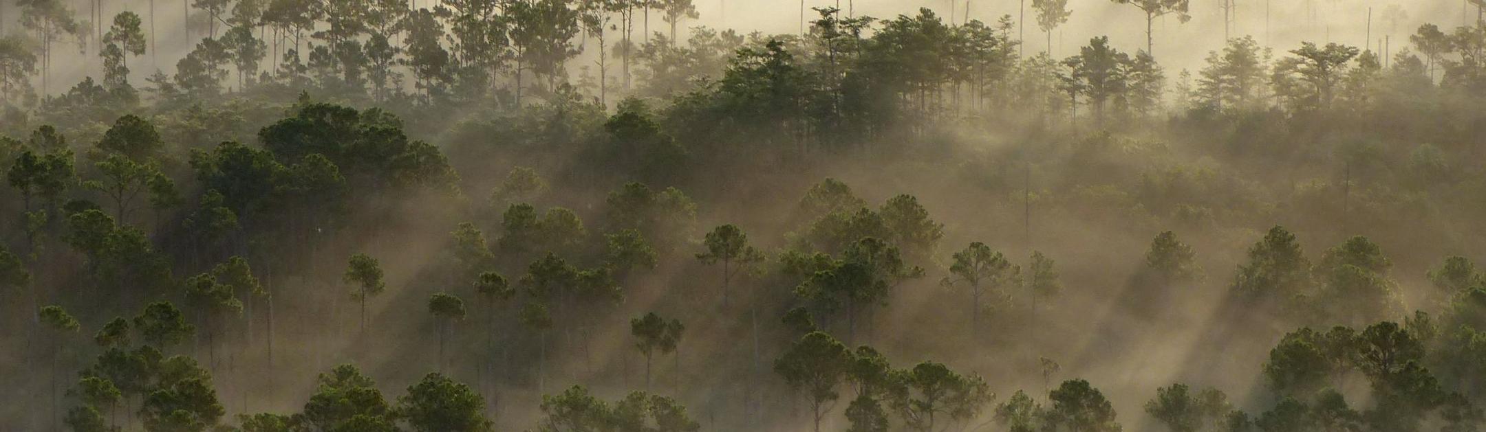 Big Cypress National Preserve (U.S. National Park Service)