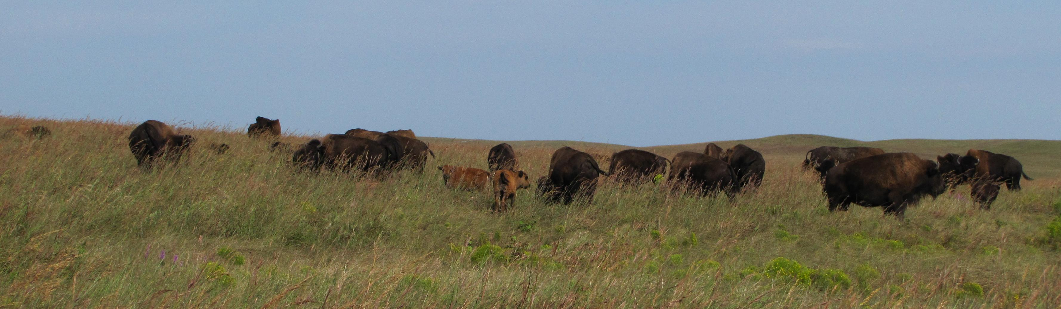 tallgrass prairie national preserve u s national park