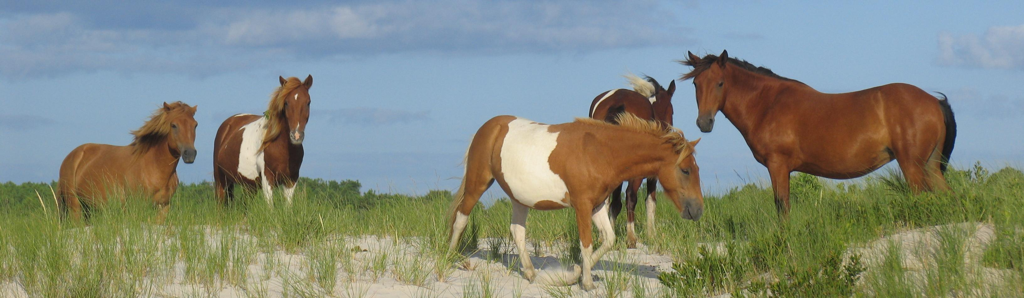 assateague island national seashore u s national park service
